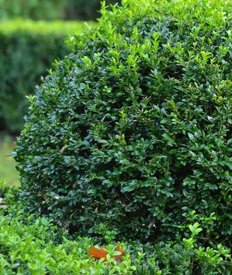 Yard By Yard Makeovers LLC Shrubs & Hedges