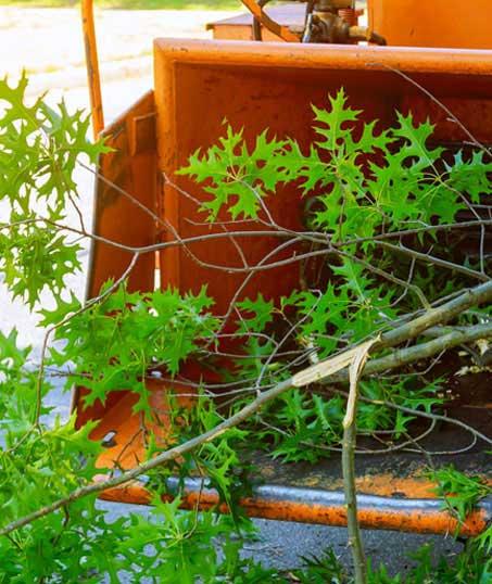 Yard By Yard Makeovers LLC Tree Trimming