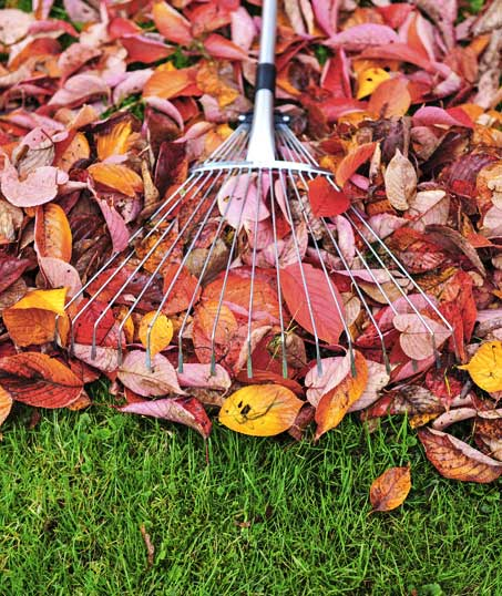 Yard By Yard Makeovers LLC Fall Clean Up